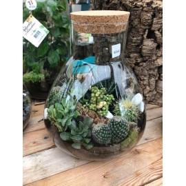 Terrarium de cactus et...
