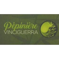 PEPINIERE VINCIGUERRA